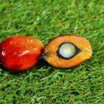 マレーシア、インドネシア、EUをめぐるパーム油の複雑な問題