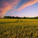 カルフールはブロックチェーン追跡を利用した食品の売上が伸びている