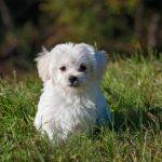 犬を飼う事に遺伝的要因が関係している可能性