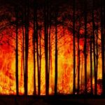 インドネシアの首都移転が引き起こす泥炭火災リスク
