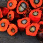 マレーシアが対EUパーム油WTO提訴から撤退:強気な政府