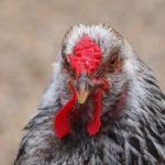 鳥インフルエンザの問題もかなり深刻